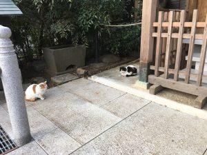 猫地帯の法明寺(ほうみょうじ)の安国堂にいた猫ちゃん