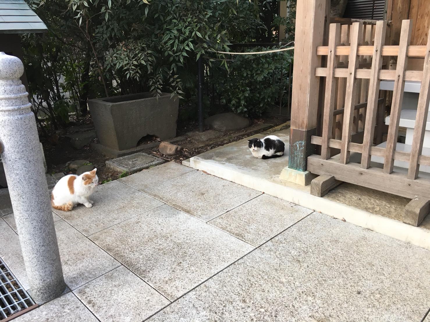 【雑司が谷駅】豊島区のノスタルジックな街『雑司が谷』法明寺・鬼子母神を訪ねる:パート1の法名寺の安国堂にいた猫