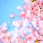 【池袋駅】春爛漫!公園まわって桜を見に行こう!池袋東口の満開公園お花見散歩コース。