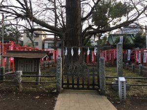 猫地帯の法明寺(ほうみょうじ)の銀杏・公孫樹