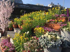 西武池袋本店の空中庭園の睡蓮の庭2
