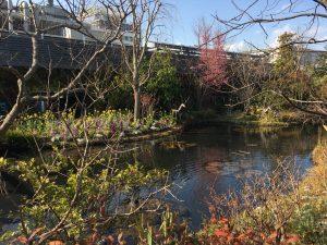 西武池袋本店の空中庭園の睡蓮の庭4