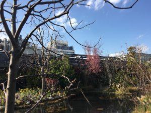 西武池袋本店の空中庭園の睡蓮の庭5