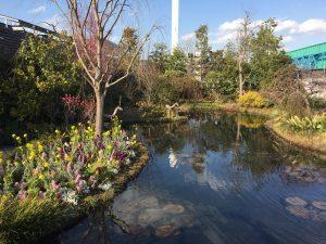 西武池袋本店の空中庭園の睡蓮の庭6