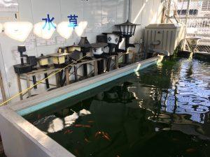 西武池袋本店の空中庭園のフィッシュショップの釣り堀