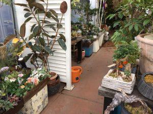 西武池袋本店の空中庭園のガーデニングショップ4