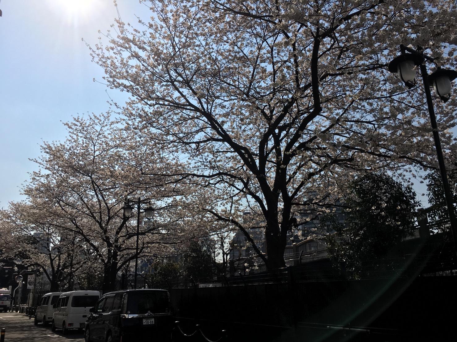 【池袋駅】春爛漫!公園まわって桜を見に行こう!池袋東口の満開公園お花見散歩コース。の池袋駅前公園1