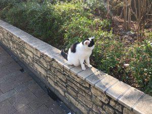 【池袋駅】春爛漫!桜を見に行こう!池袋東口の満開コースの池袋駅前公園の四面塔尊横にいた猫