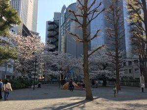 【池袋駅】春爛漫!桜を見に行こう!池袋東口の満開コースの東池袋公園1