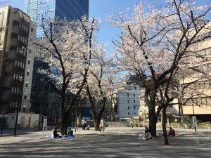 【池袋駅】春爛漫!桜を見に行こう!池袋東口の満開コースの東池袋公園2