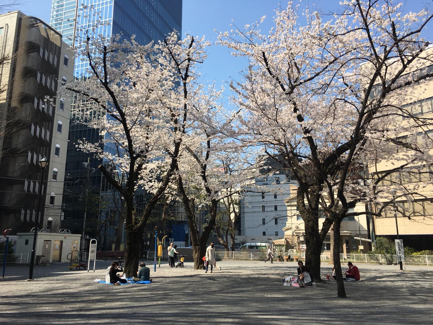 【池袋駅】春爛漫!公園まわって桜を見に行こう!池袋東口の満開公園お花見散歩コース。の東池袋公園2