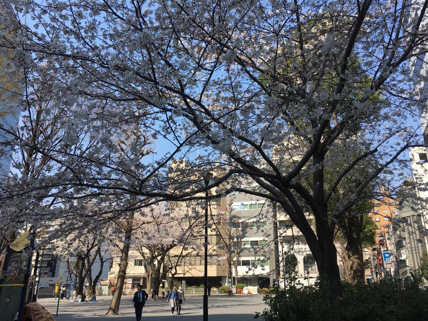 【池袋駅】春爛漫!公園まわって桜を見に行こう!池袋東口の満開公園お花見散歩コース。の東池袋公園3