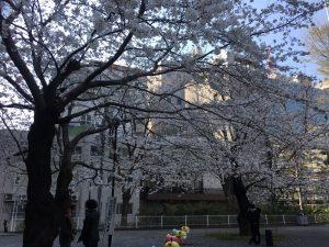 【池袋駅】春爛漫!桜を見に行こう!池袋東口の満開コースの東池袋公園4