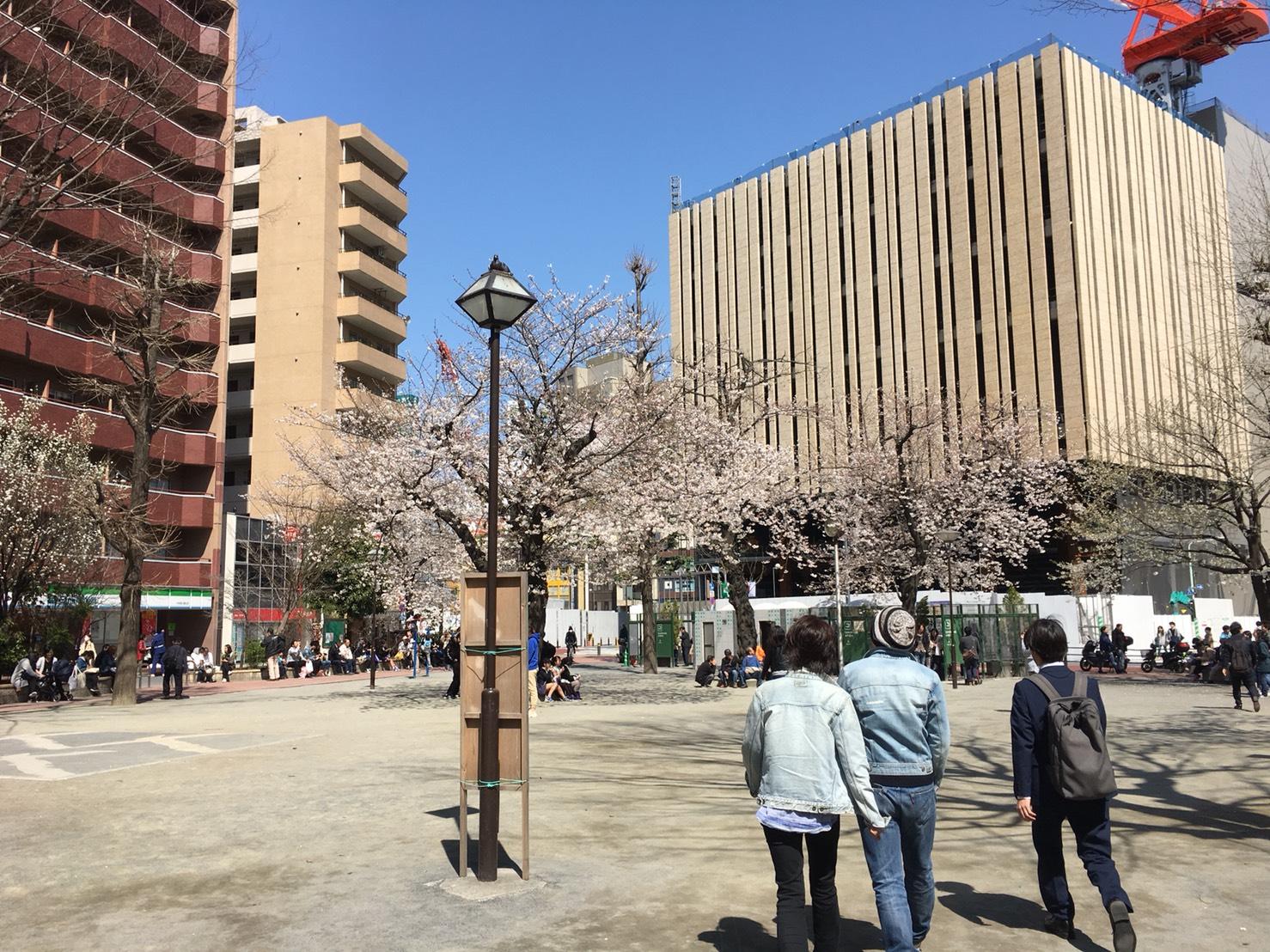 【池袋駅】春爛漫!公園まわって桜を見に行こう!池袋東口の満開公園お花見散歩コース。の中池袋公園1