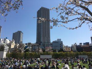 【池袋駅】春爛漫!桜を見に行こう!池袋東口の満開コースの南池袋公園1