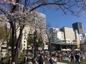 【池袋駅】春爛漫!桜を見に行こう!池袋東口の満開コースの南池袋公園2