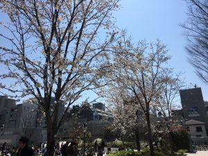 【池袋駅】春爛漫!桜を見に行こう!池袋東口の満開コースの南池袋公園3