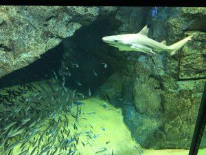 【池袋駅】「サンシャイン水族館」で癒されようよ!ほら早く!の水族館5