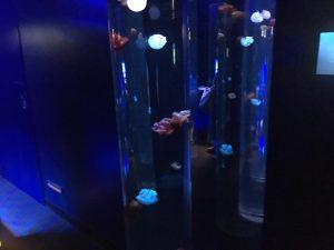 【池袋駅】「サンシャイン水族館」で癒されようよ!ほら早く!の水族館7