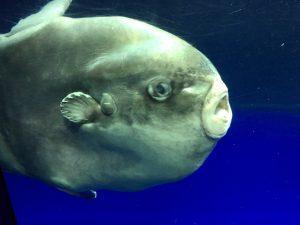 【池袋駅】「サンシャイン水族館」で癒されようよ!ほら早く!の水族館8