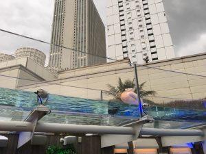【池袋駅】「サンシャイン水族館」で癒されようよ!ほら早く!のペリカン2