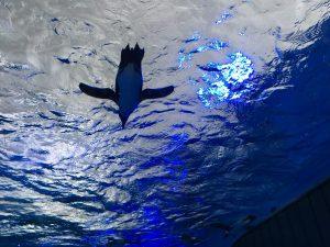 【池袋駅】絶対行くべき!ファミリーもデートも超楽しい「サンシャイン水族館」最大18%割引も。