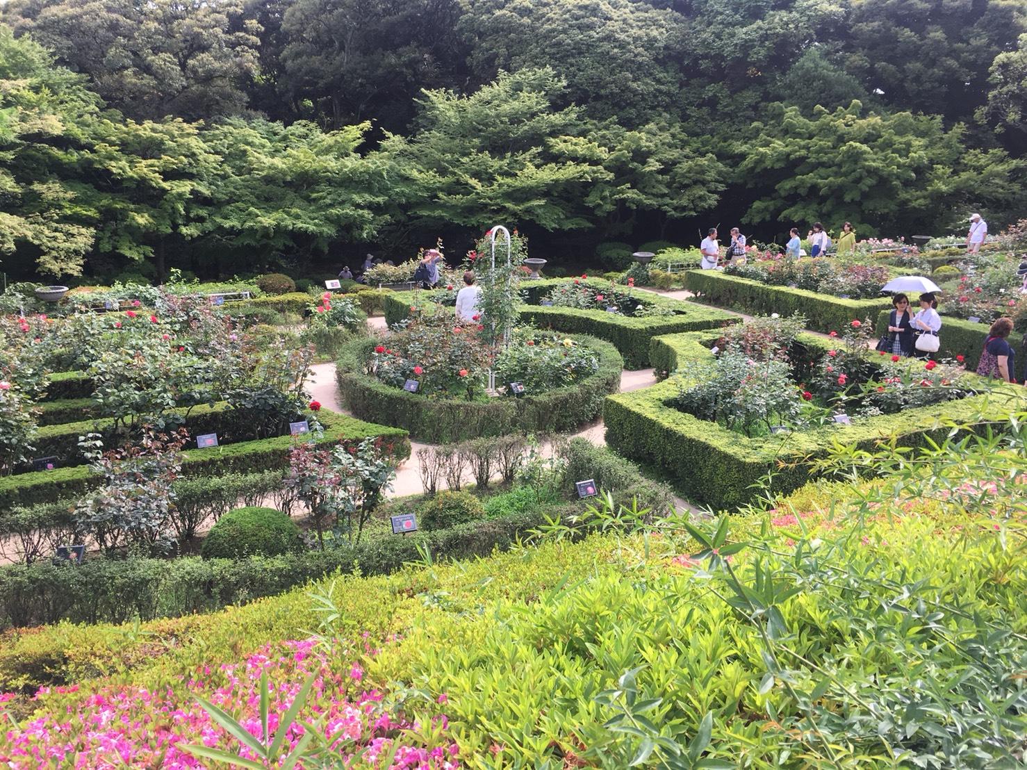 【上中里駅】バラが咲き誇る日英が混ざる庭園「旧古河庭園」のバラ園4
