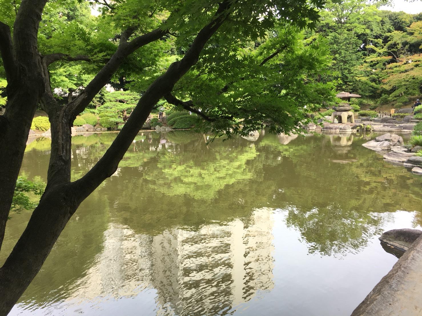 【上中里駅】バラが咲き誇る日英が混ざる庭園「旧古河庭園」の和庭園2