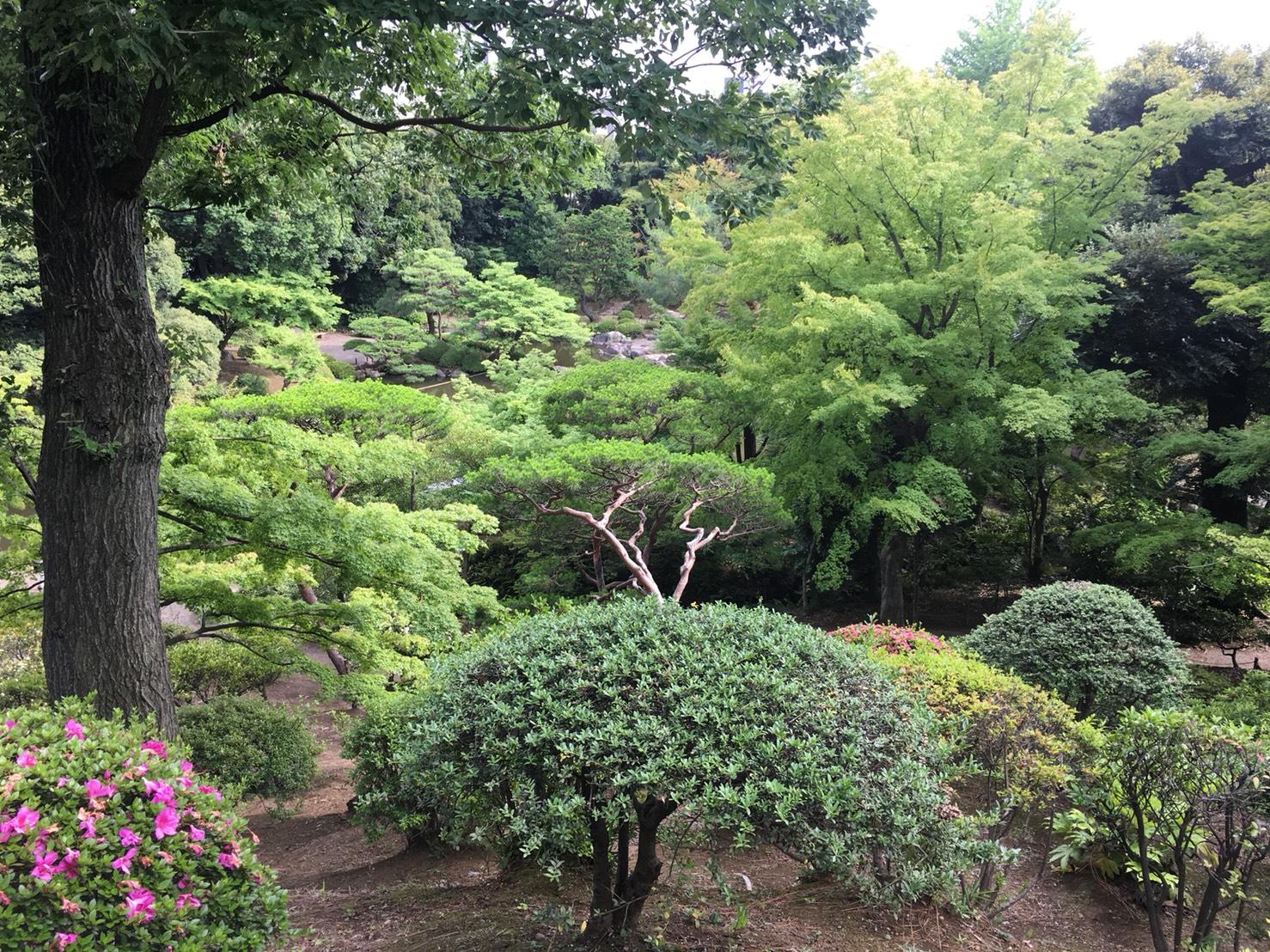 【上中里駅】バラが咲き誇る日英が混ざる庭園「旧古河庭園」の和庭園6