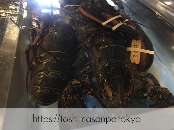【上板橋駅】上質シーフードをロブスターの間近でいただく。水槽前で写真撮ろう「レッドロブスター」の3ポンドロブスター