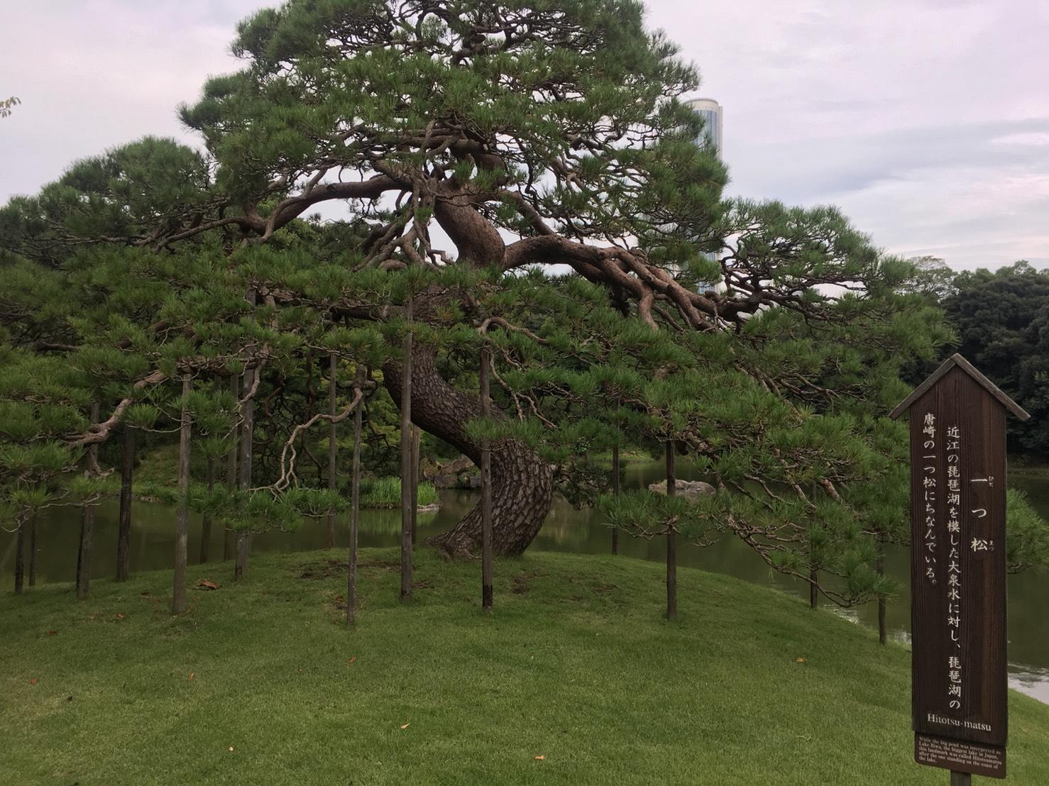【飯田橋駅】江戸時代の中国趣味豊かな景観で一句「小石川後楽園」の小石川後楽園の一つ松