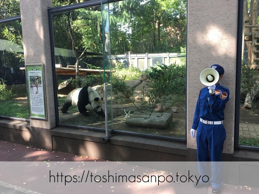 【上野駅】高速上野散歩を提案!大満足の絶品洋食「たいめいけん」のあとに上野動物園で超エンジョイの上野動物園のパンダ