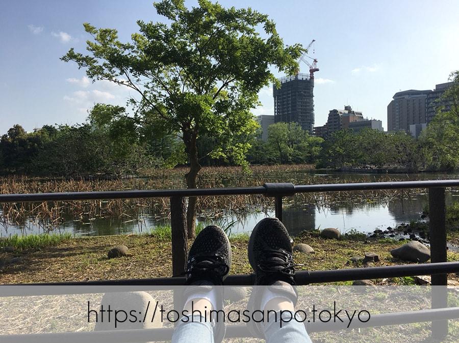 【上野駅】高速上野散歩を提案!大満足の絶品洋食「たいめいけん」のあとに上野動物園で超エンジョイの上野動物園の不忍池で2